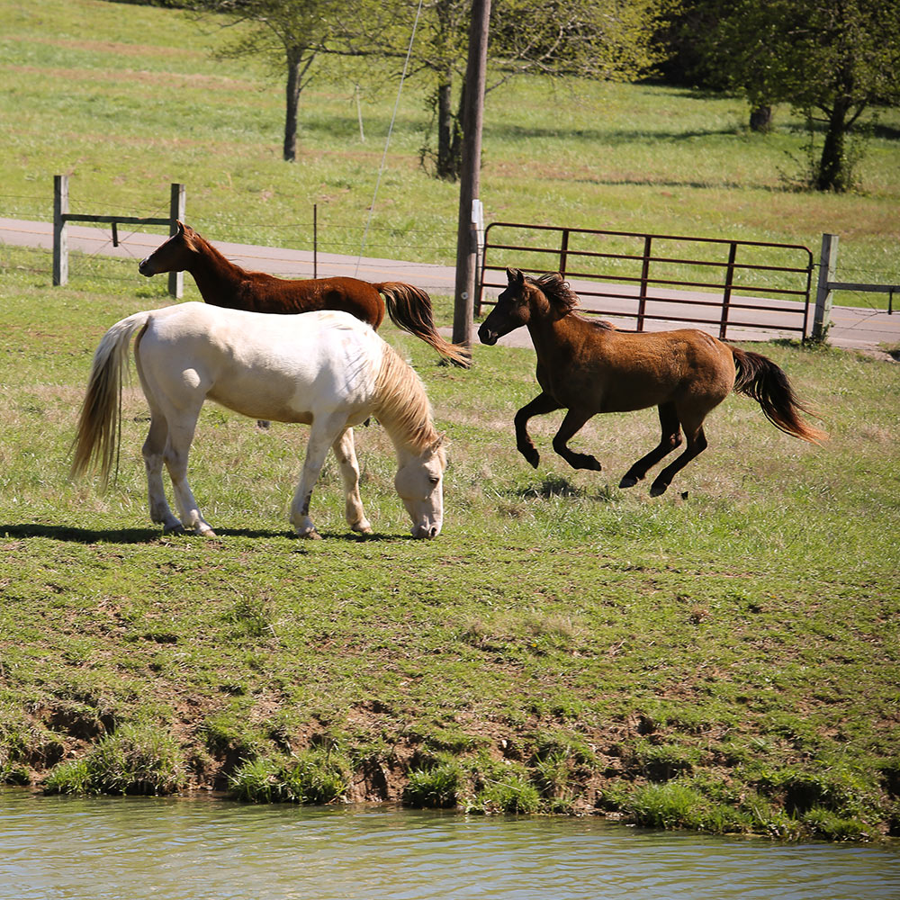 Retired Horses of Southern Paradise Horse Retirement Farms