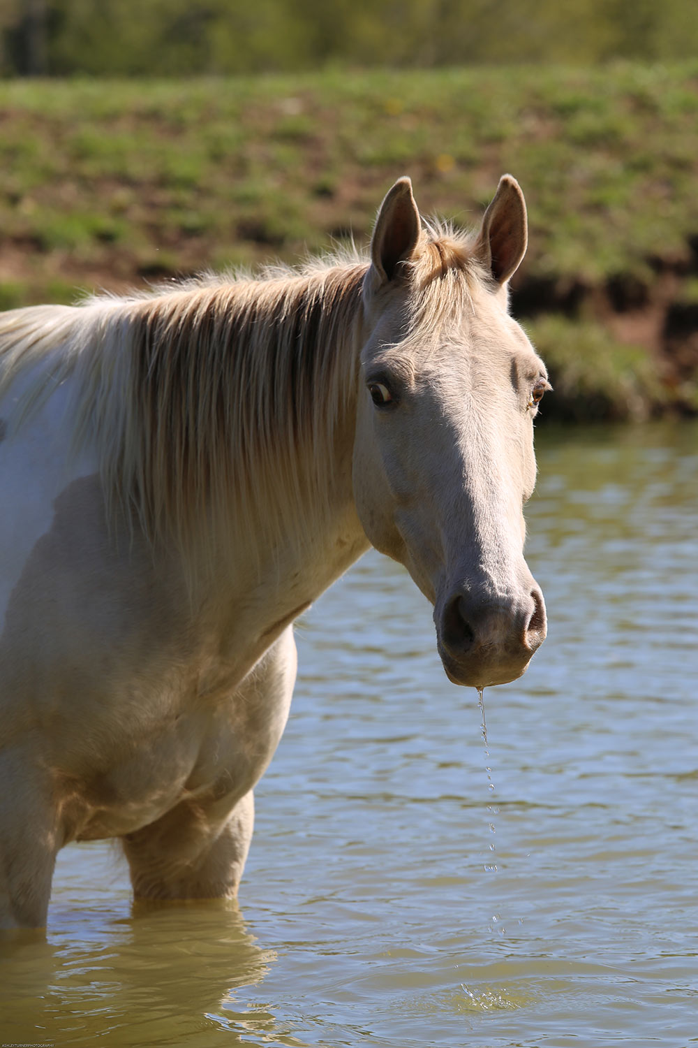 Horse Retirement Farms - Playing in the Water