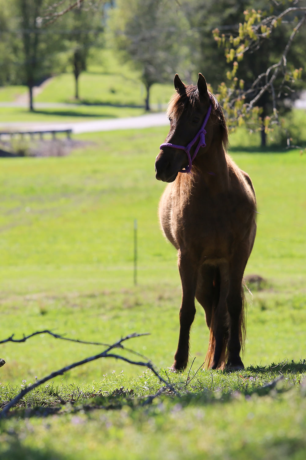 Horse Retirement Farms - Retired Horse in Pasture