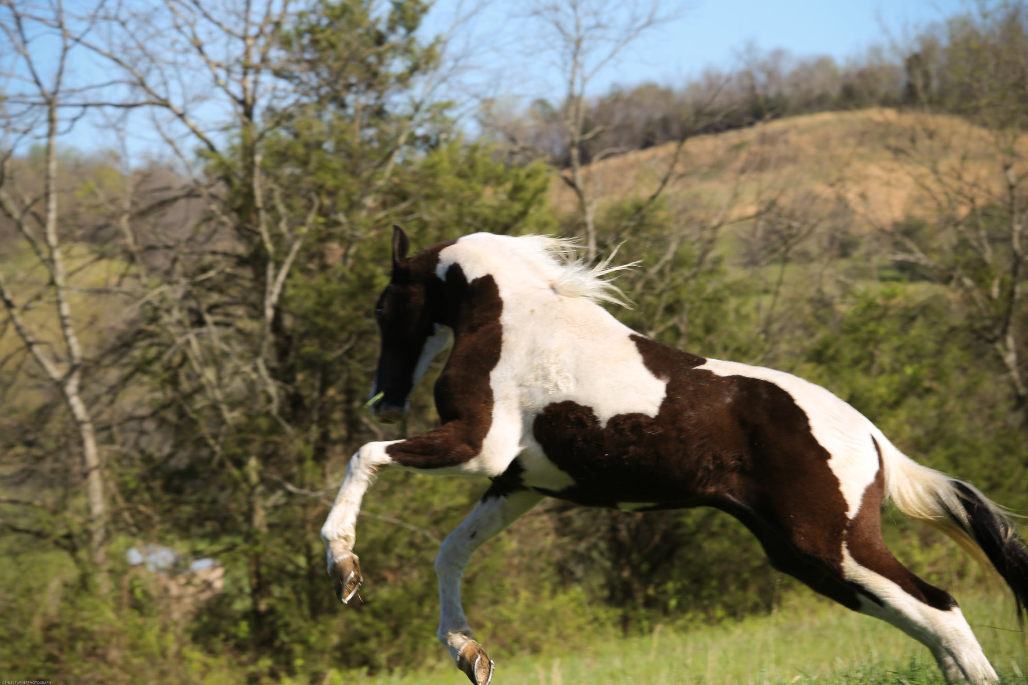 Equine Retirement Home