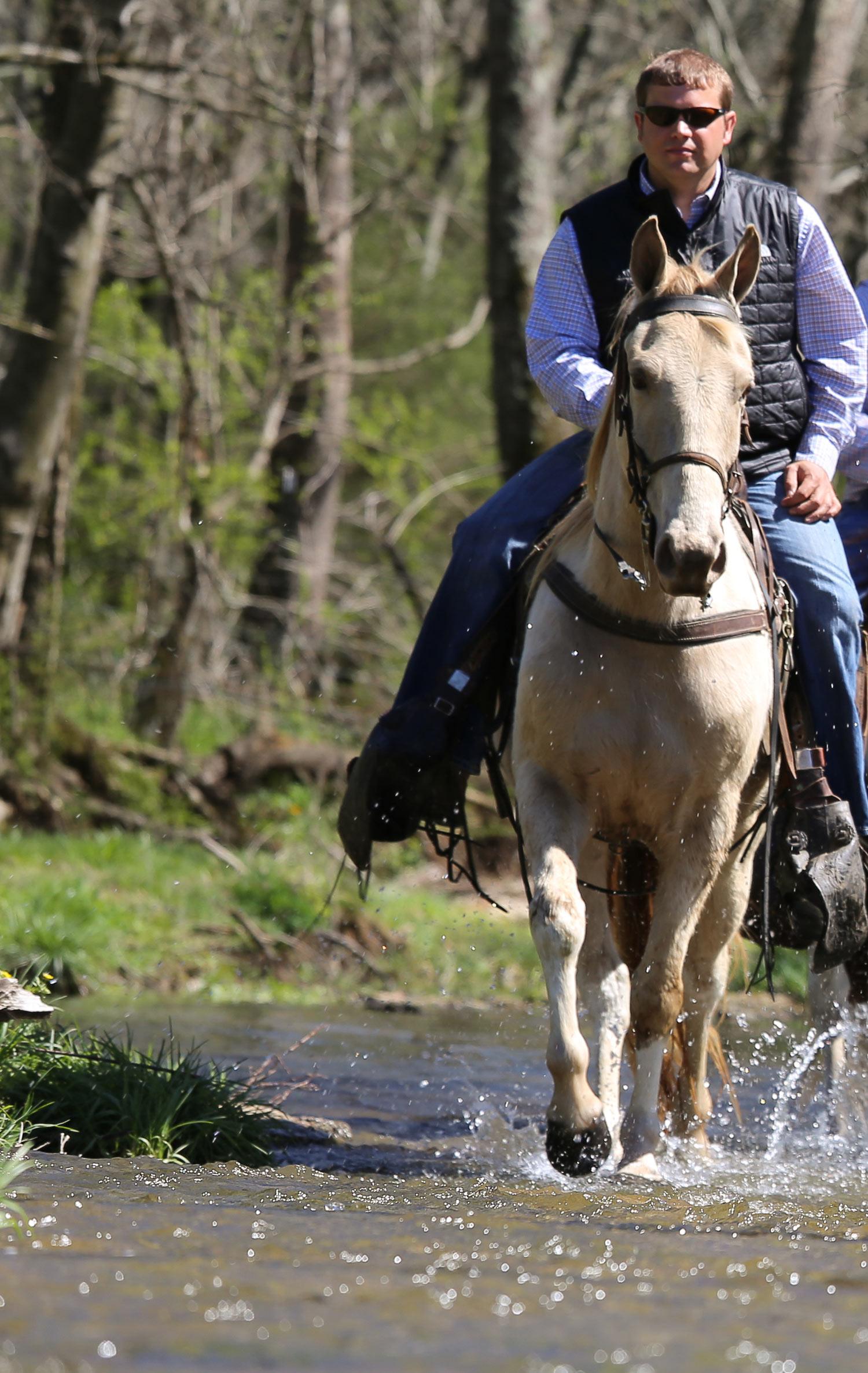 Home for Retired Horses
