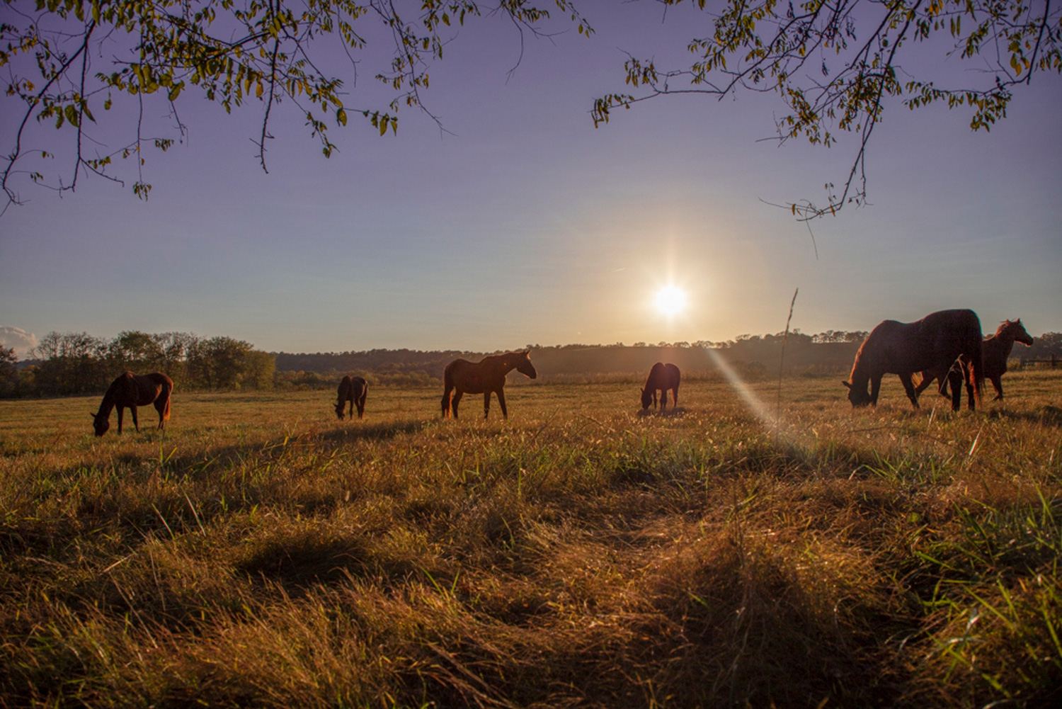 Pasture Boarding | Southern Paradise Horse Retirement Home